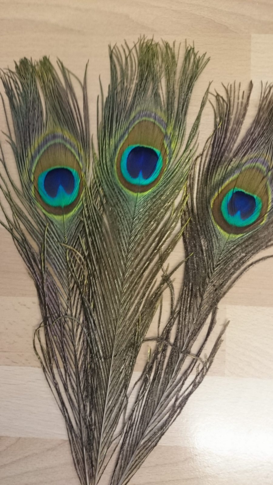 peacock feathers fabric land