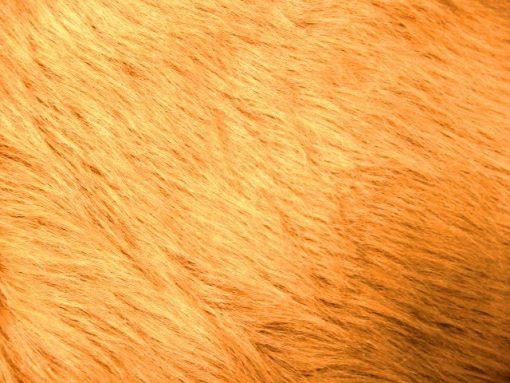 honey long hair fur