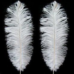 Medium Charleston Feathers