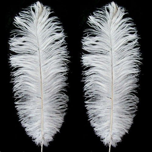 Medium Charleston Feathers