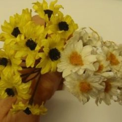 sun daisy
