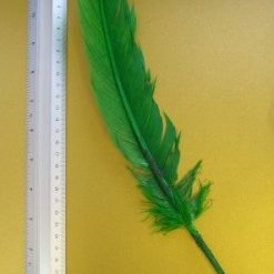 emerald indian feather