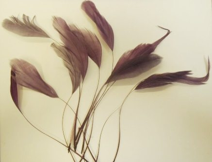 Feathers ST19/1482