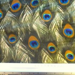 Beige Satin Print Fabric Peacock Plumes