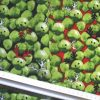 Suiting Fabric Polyester Christmas Party Sprouts