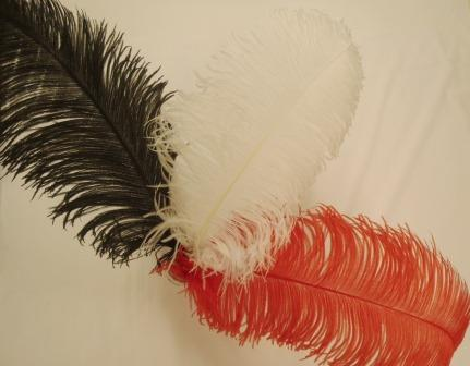 Feathers Las Vegas Ostrich Feather Plumes