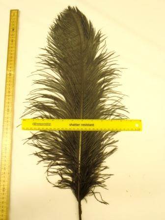 Feathers Las Vegas Ostrich Feather Plumes black