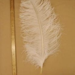 Feathers Las Vegas Ostrich Feather Plumes white