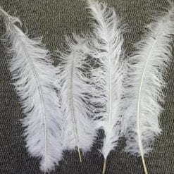 large feathers